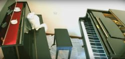 Перевозка пианино в Запорожье